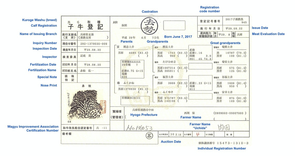 a wagyu nose print certificate, explained in detail. Important if you wonder how much does a wagyu cow cost?