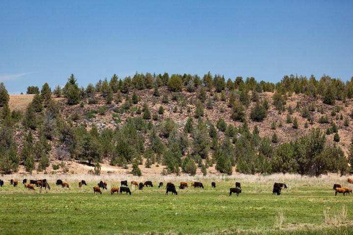 Novy Ranch