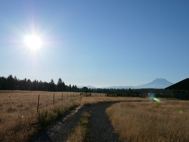 Harlow Cattle Company view of Mt Rainier on a sunny day in May 2018