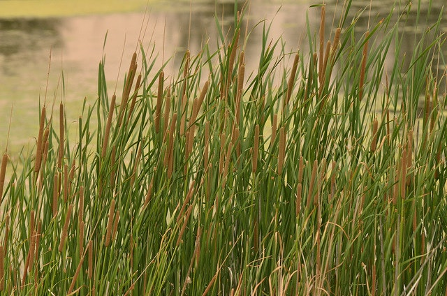 Little Shasta Ranch, close up of grass